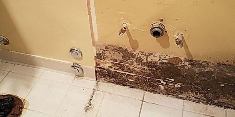 mold in chicago home