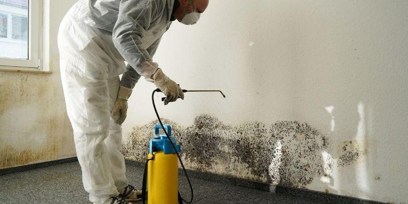 mold remediation professional