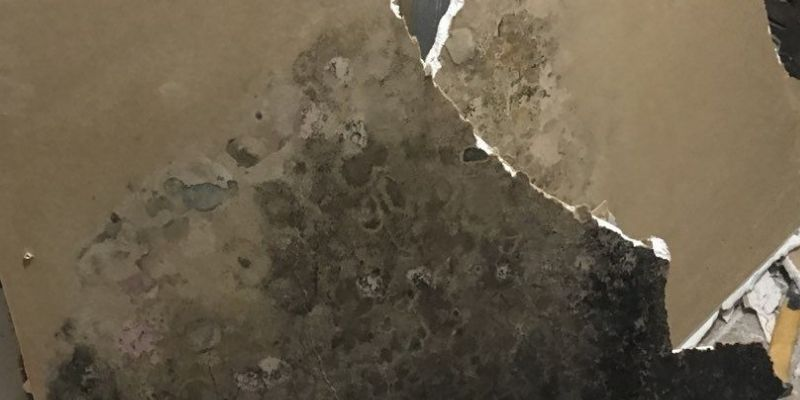 mold drywall